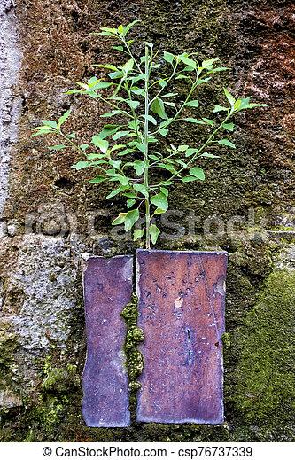 Small plant - csp76737339