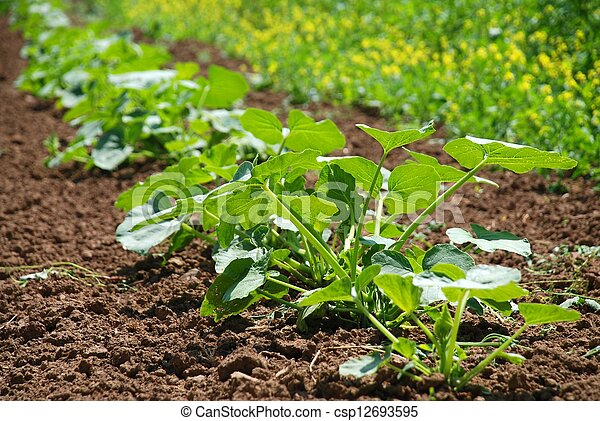 small plants on a field - csp12693595