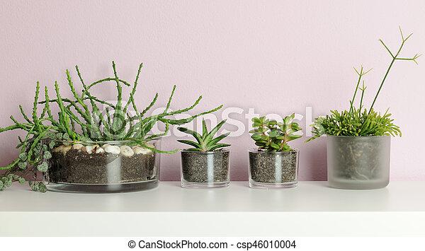 small pots with succulent plants - csp46010004