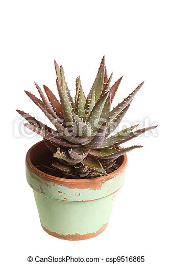 Small potted aloe plant against white - csp9516865