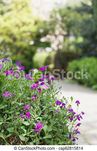 Small Purple Flowers Foreground Against Background With Green