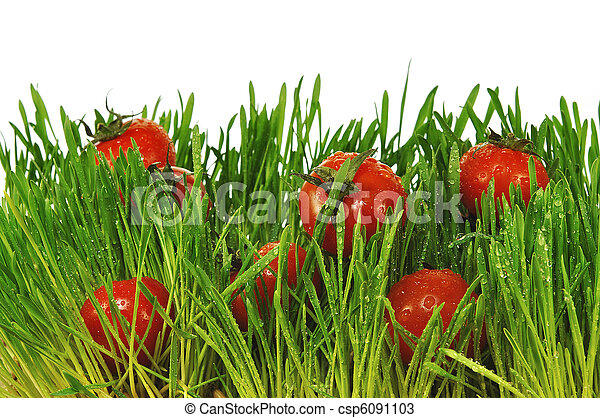 Small red tomatoes in a green grass - csp6091103