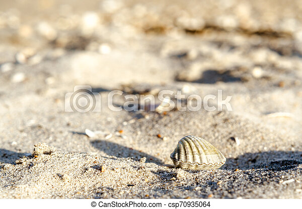small seashell on sand close up - csp70935064
