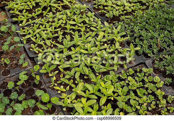 small seedlings of vegetables - csp68996509