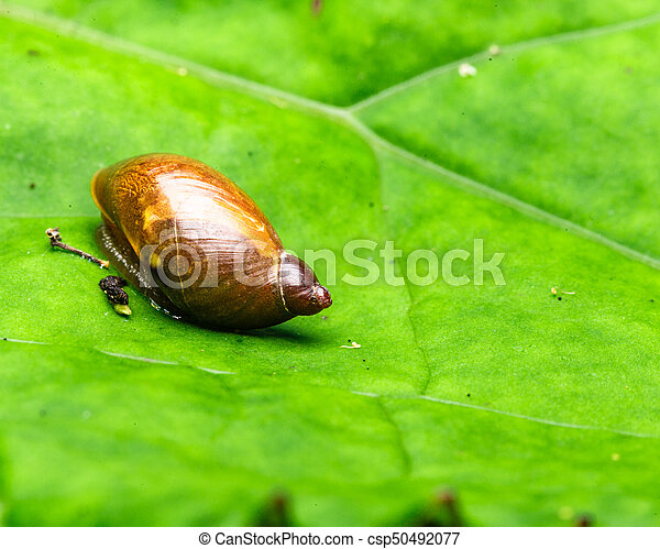 Small snail on a leaf - csp50492077