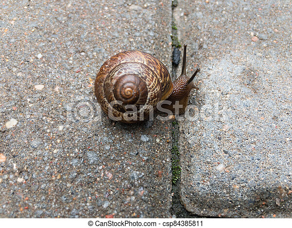 Small snail on the tile close up - csp84385811