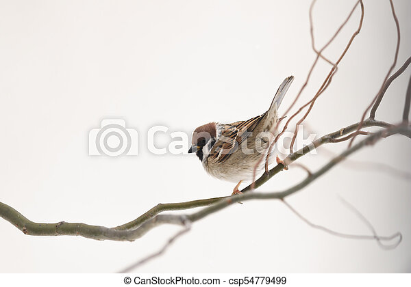 Small sparrow on twig close up - csp54779499