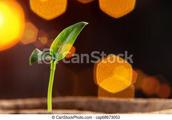 Small sprout of pepper plant in a paper pot - csp68673053