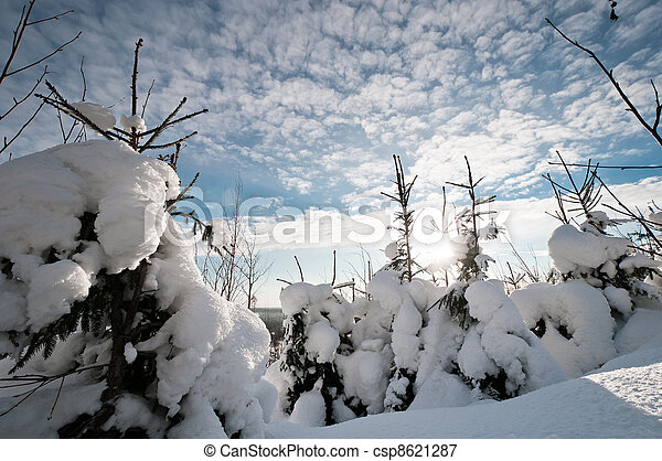 Small spruces with cloudscape - csp8621287
