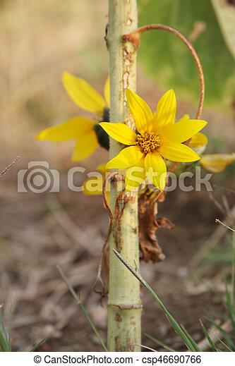 Small sunflower - csp46690766