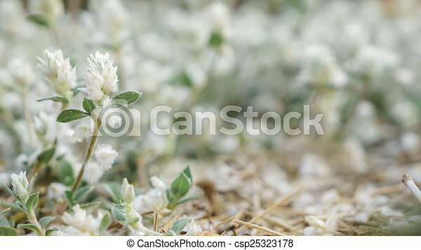 small white flower - csp25323178