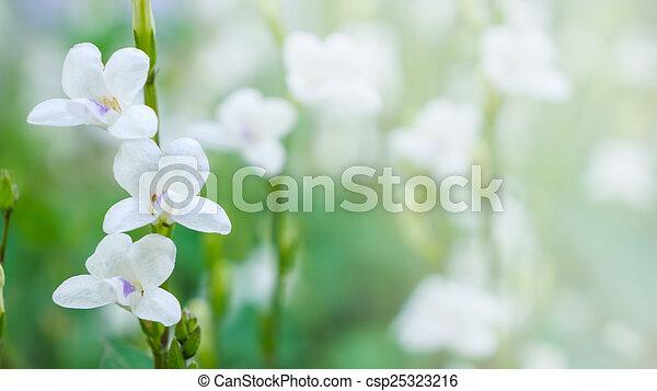 small white flower - csp25323216