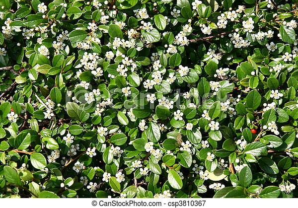 Small white flowers background white spring flowers with green leaves small white flowers background csp3810367 mightylinksfo