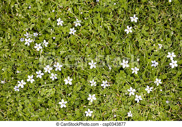 Small white flowers blooming in the grass photo of small white small white flowers blooming in the grass csp0343877 mightylinksfo