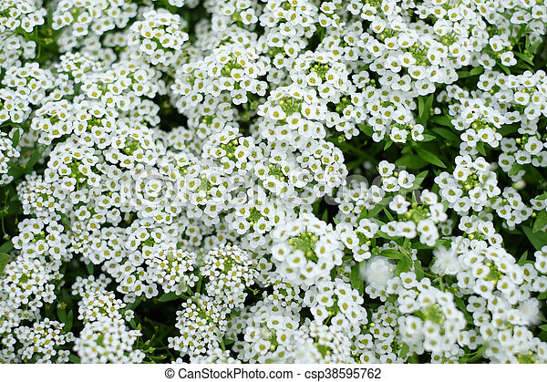 Small White Flowers In The Grass In The Daytime In The Summer