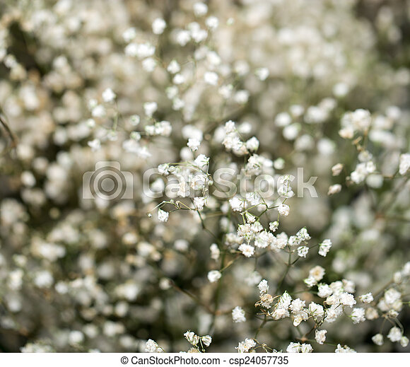 Small white flowers macro small white flowers macro csp24057735 mightylinksfo