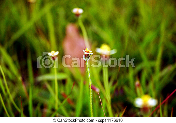 small white flowers - csp14176610