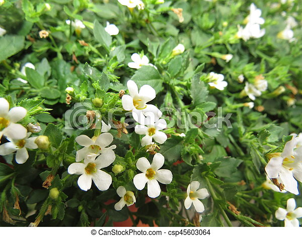 Small white flowers on a background of green grass mightylinksfo