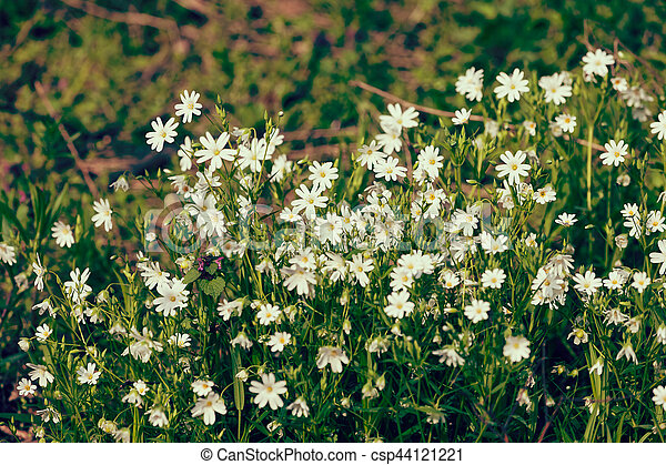 Small white flowers kinds of white flowers in the meadow note small white flowers csp44121221 mightylinksfo