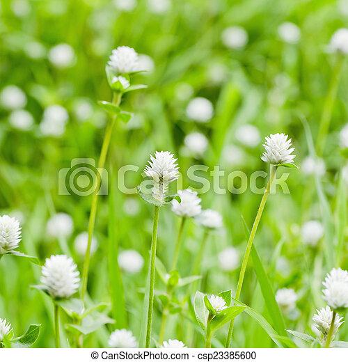 small white flowers - csp23385600