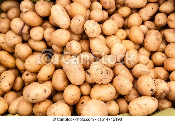 Small white potatoes - csp14715190