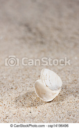 Small white seashell on sand - csp14196496