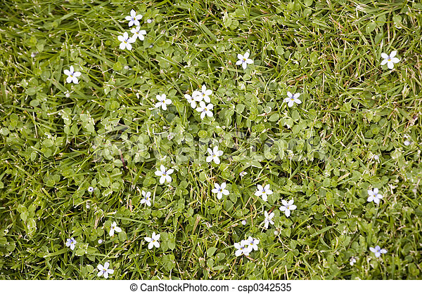 Small white star shaped flowers blooming in the grass photo of small white star shaped flowers blooming in the grass csp0342535 mightylinksfo