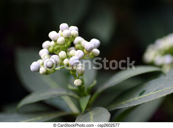 Small White Tropical Flowers Beauty White Small Tropical Flowers