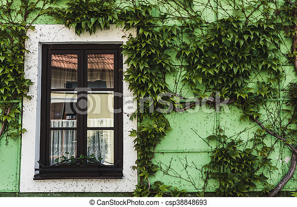 small Window on green wall with ivy - csp38848693