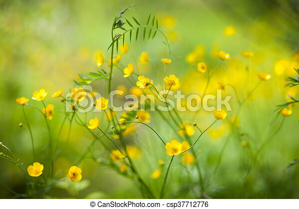 Small yellow flowers in green grass in summer small yellow flowers in green grass csp37712776 mightylinksfo