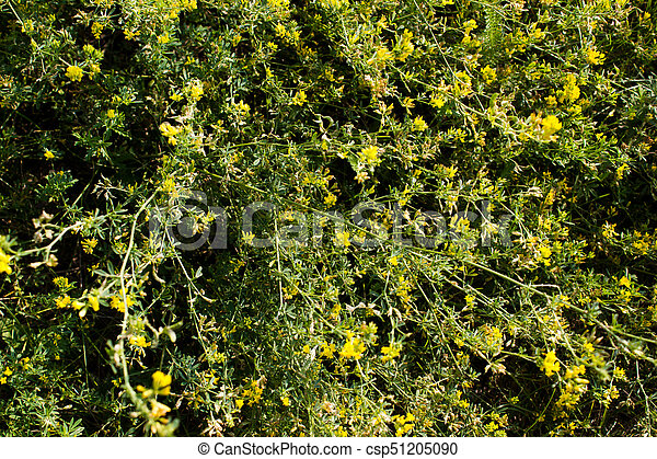 Small yellow flowers in green grass small yellow flowers in green grass csp51205090 mightylinksfo