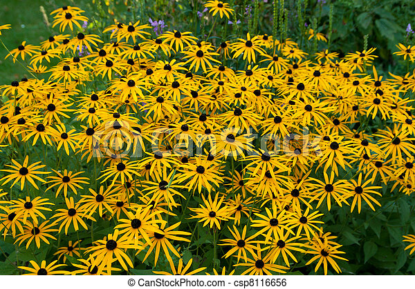 small yellow flowers - csp8116656