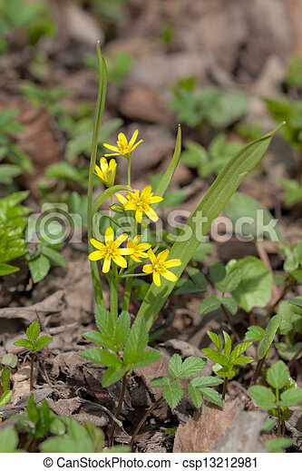 Small yellow spring flowers in the forest small yellow spring flowers csp13212981 mightylinksfo