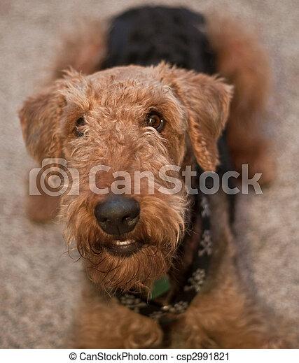 Smiling dog - csp2991821