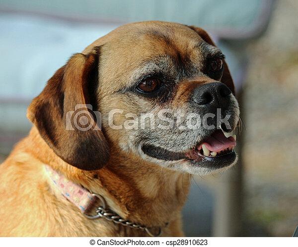 smiling dog - csp28910623