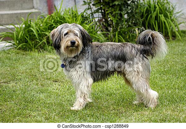 Smiling dog - csp1288849
