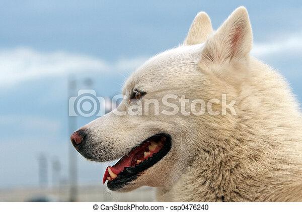 Smiling dog - csp0476240