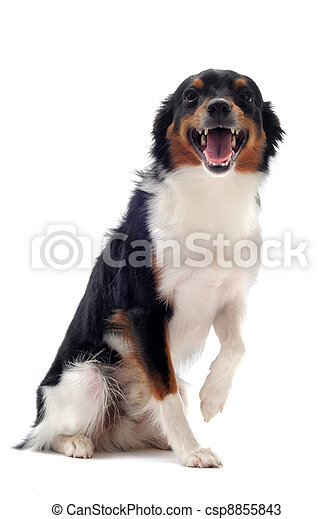 smiling dog - csp8855843