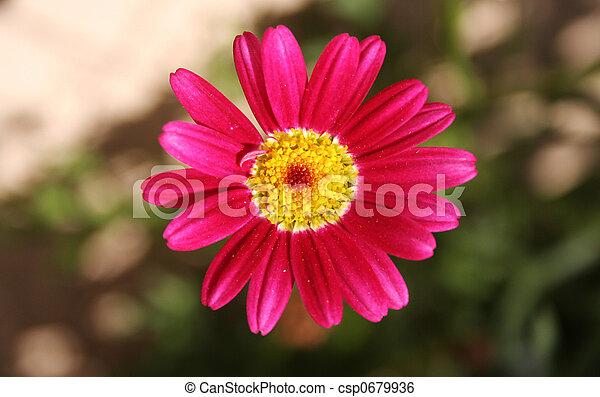 smiling flower - csp0679936