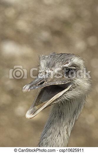 Smiling ostrich - csp10625911