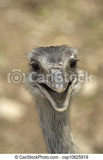 Smiling ostrich - csp10625919