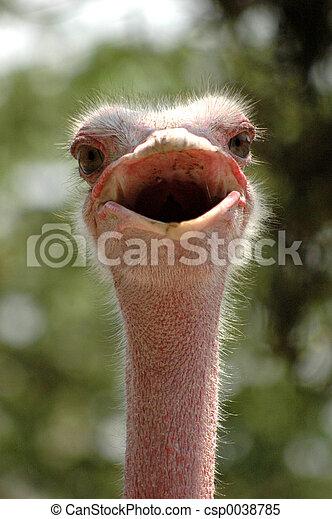 Smiling Ostrich - csp0038785