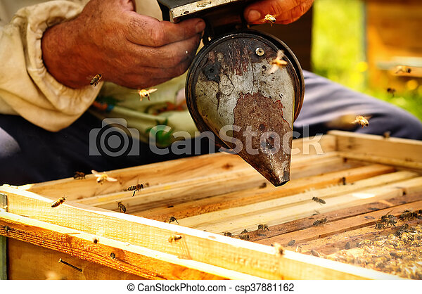 how to keep wood bees away
