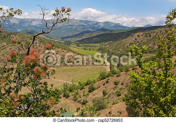 Smoketree on the background of the summer landscape of Crimean mountains - csp52726953