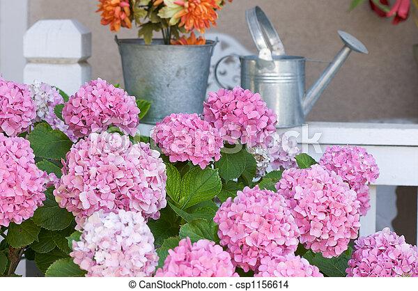 smukke, hydrangea, blomstre - csp1156614