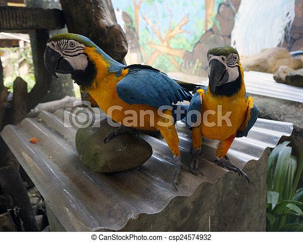smukke, papegøjer, branch, siddende - csp24574932