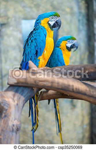 smukke, stor, par, papegøjer, branch - csp35250069