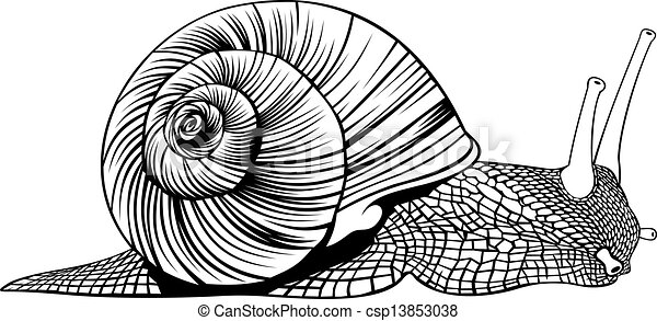 snail - csp13853038