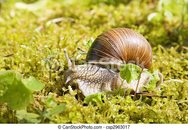 snail in the moss - csp2963017