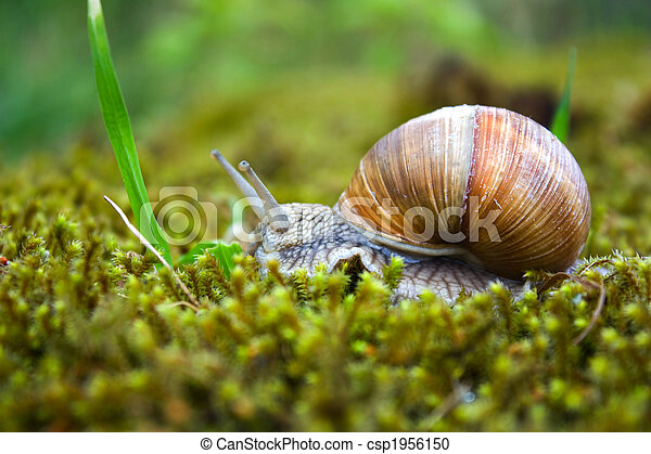 snail in the moss - csp1956150